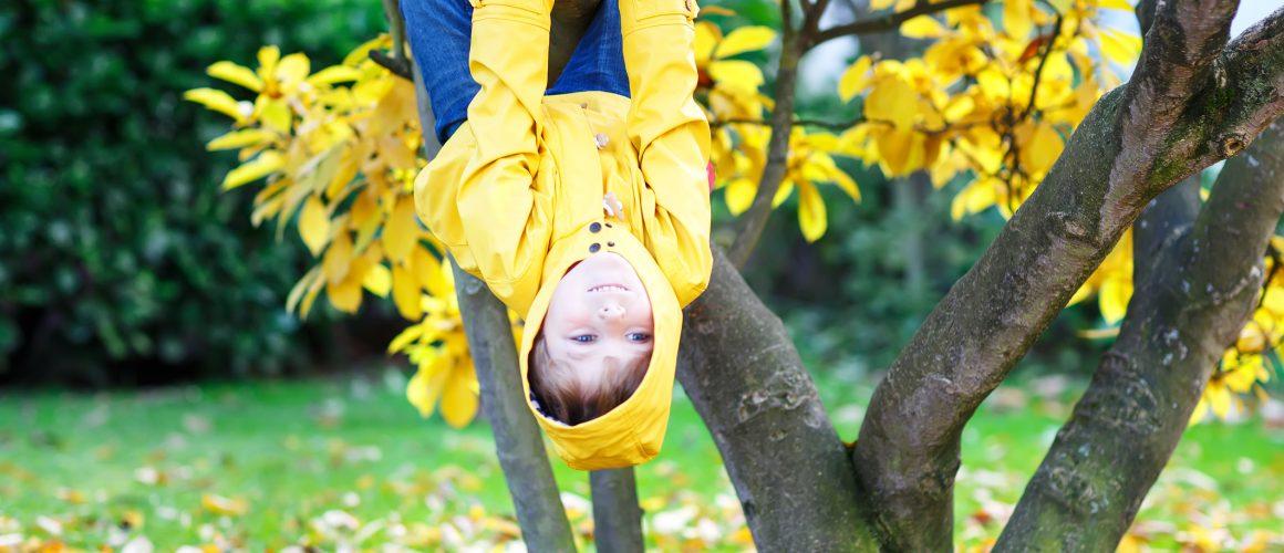 op zijn kop in de boom